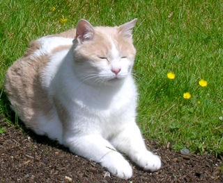 真佛宗真實體現「平等性智」。麥家愛貓「歡」往生獲舍利子。圖為麥家愛貓「歡」生前照片。p1025-12-01