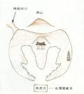 p1165-a1-01