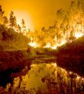 森林大火出動千名消防隊員打火